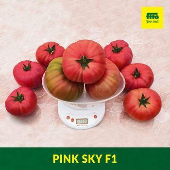 купить Пинк Скай F1 - семена гибрида томата - Семилас Фито в Кишинёве
