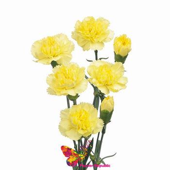 купить Гвоздика желтая пошутчно в Кишинёве