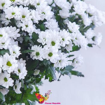 купить Хризантема кустовая мини белая поштучно в Кишинёве