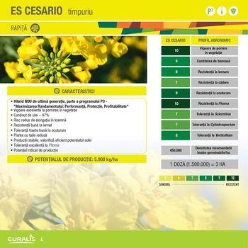 cumpără CESARIO - Semințe de rapiță de toamnă - Euralis Semences în Chișinău