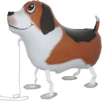 купить Собака в Кишинёве