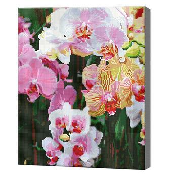 Замечательные орхидеи, 40x50 см, алмазная мозаика, 40x50 см, Артукул: QA203468