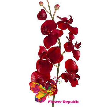 купить Орхидея красная в Кишинёве