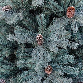 купить Новогодняя елка, DEIN, Blue Spruce, 2.10м, 1113 веток, Светодиодные лампы, ПВХ+ПE в Кишинёве