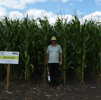 купить Бонфаер - Семена кукурузы - Семилас Фито в Кишинёве