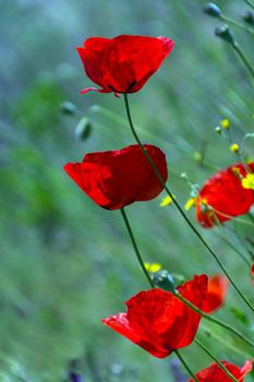 Картина напечатанная на холсте - Картина Цветы 0012 / Печать на холсте