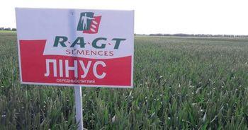 купить Линус - Семена озимой Пшеницы - RAGT Semences в Кишинёве