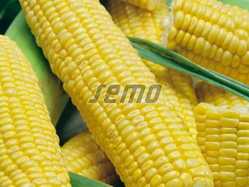 купить Люминокс - семена гибрида кукурузы сахарной - СЕМО в Кишинёве