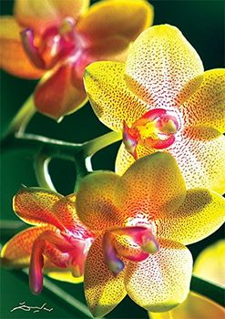 "10503 Trefl Puzzles - ""1000"" -  Nature Limited edition Flowers Orchidea / Trefl"