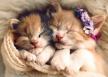 "37271 Trefl Puzzles - ""500"" - Sleeping kittens"