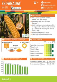 купить Фарадей - Семена кукурузы - Евралис Семанс в Кишинёве