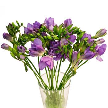 cumpără Freesia violet  Preț o bucată în Chișinău