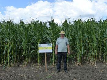 купить Атлас - Семена кукурузы - Семилас Фито в Кишинёве