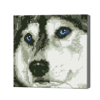 Голубоглазая хаски, 20x20 см, алмазная мозаика