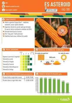 купить Астероид - Семена кукурузы - Евралис Семанс в Кишинёве