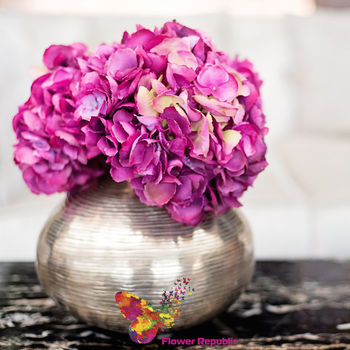 купить Гортензия фиолетовая ( голова) в Кишинёве