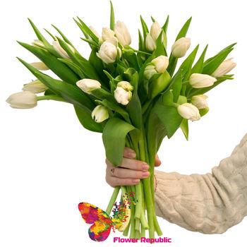 купить Белые голландские  тюльпаны поштучно в Кишинёве