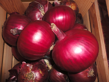 купить Ламбруско F1 - семена гибрида лука красного - Энза Заден в Кишинёве