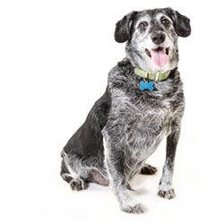 Câini seniori (7+)