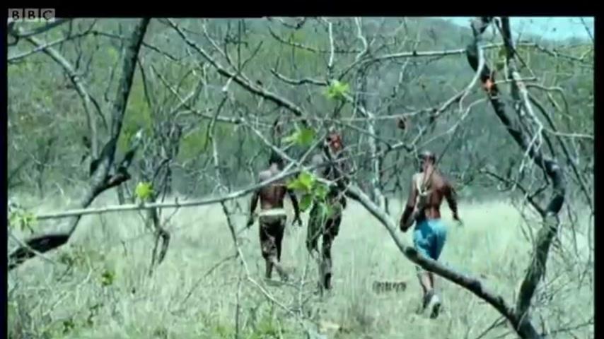 Как бегуны-охотники в Африке охотятся за антилопами куду