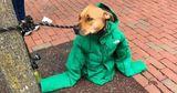 Девушка отдала свою куртку собаке, чтобы та не замерзла на улице