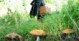 В Шолданештах в лесу заблудилась 12-летняя девочка