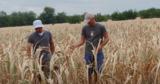 Фермеры из двух сел рискуют остаться без домов и техники из-за засухи