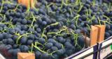 Около 30% экспорта винограда приходится на долю одной бизнес-ассоциации