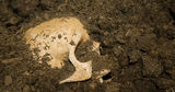 Житель Мозамбика выкопал кости родителей ради мотоцикла