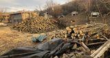 В Яловенском районе незаконно вырубили более 270 деревьев
