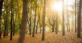 Лесной фонд Молдовы занимает 446 тысяч гектаров земли
