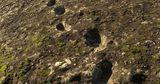На склоне итальянского вулкана нашли следы неандертальцев