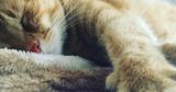В Сети появилась новая звезда – говорящий кот Гамбино