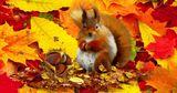 Астрономическая осень начинается 22 сентября вместе с равноденствием
