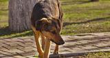 Зоозащитники недовольны работой бельцкого приюта для собак