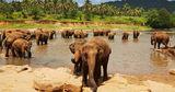 Власти Шри-Ланки планируют смягчить ограничения по въезду туристов
