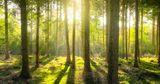 Жителям бедных стран предложили больше платить за спасение лесов