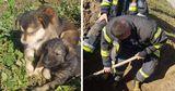 В Кишиневе спасатели и волонтеры спасли щенков, которых закопали заживо