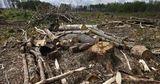 Американцы сняли фильм о незаконной вырубке леса в Румынии