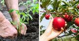 MAIB запускает кампанию для сельхозпроизводителей «Primăvara 2020» ®