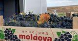 В 2021 году Молдова смогла резко нарастить объем экспорта винограда