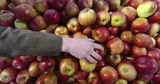 РФ выдаст дополнительные квоты молдавским экспортерам после проверок