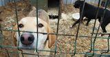 Зоозащитники в Бельцах помогают бродячим собакам найти новый дом