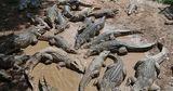 Ученые выявили новый вид крокодила, жившего более 70 миллионов лет назад
