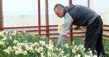 Цветоводы из села Бардар отказываются от бизнеса, который стал убыточным