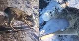 Жители Казахстана спасли косулю с налипшим на голову льдом