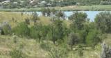 Moldsilva о вырубке деревьев в Бельцах: Это санитарная очистка леса