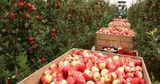 Садоводы ждут от Россельхознадзора расширения списка поставщиков