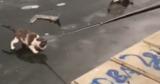 Спасение примерзшего ко льду кота в Астрахани попало на видео