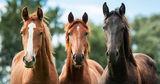 В Дубоссарах лошади помогают больным детям